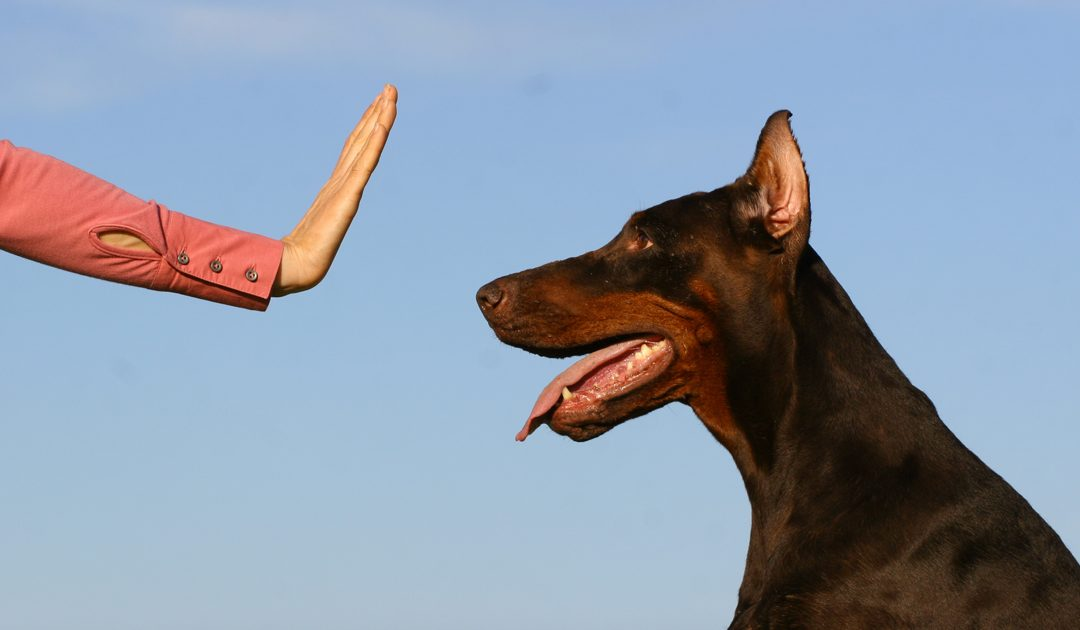 3 Great Benefits a Professional Dog Training Service Provides