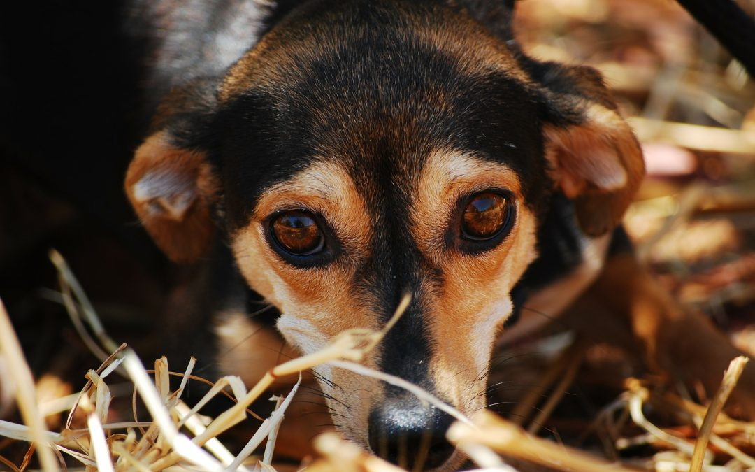 Dog Anxiety: What You Need To Know