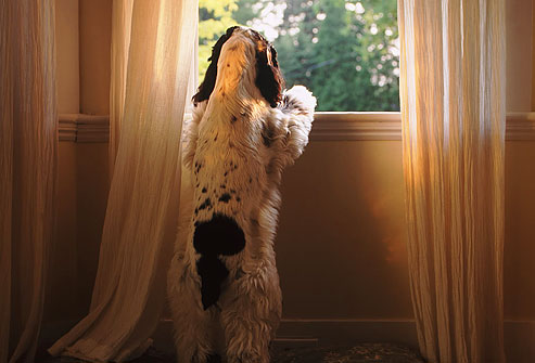 How to Eliminate Your Pup's Separation Anxiety