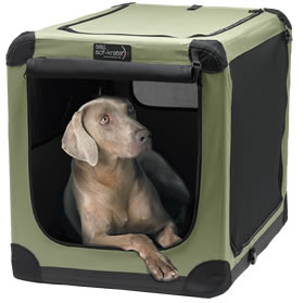 TAKING YOUR DOG ON A TRIP? TIPS AND PRECAUTIONS!