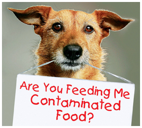 Pet Food Recalls You Need to be Aware Of