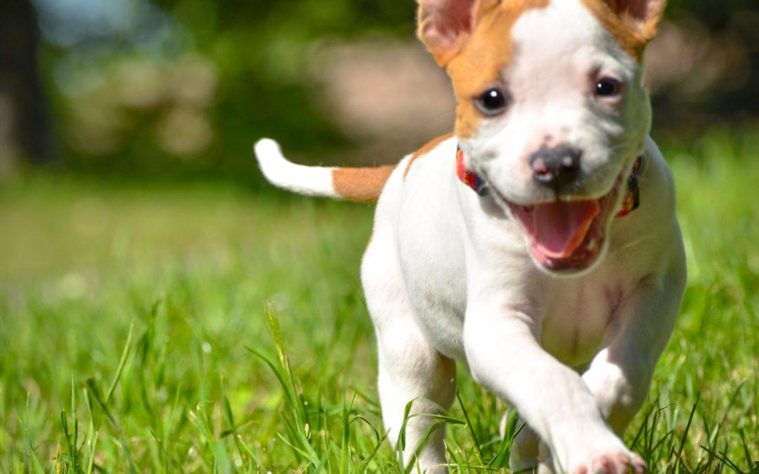 dog-friendly activities