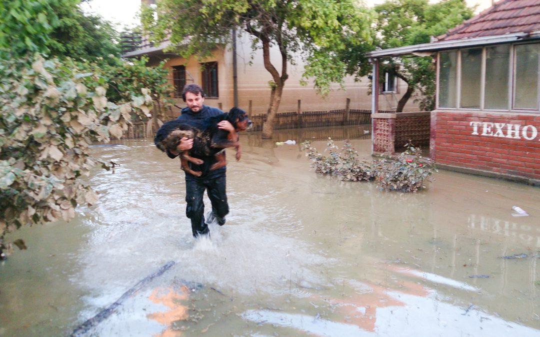 dog in flood