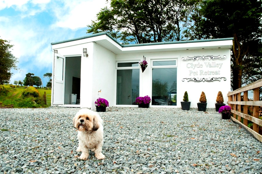 Luxury Kennel (Boarding) vs. Pet Sitting: Which is Right For You and Your Pet?