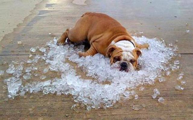 How to Keep Your Furry Companion Cool During the Hot Summer Months
