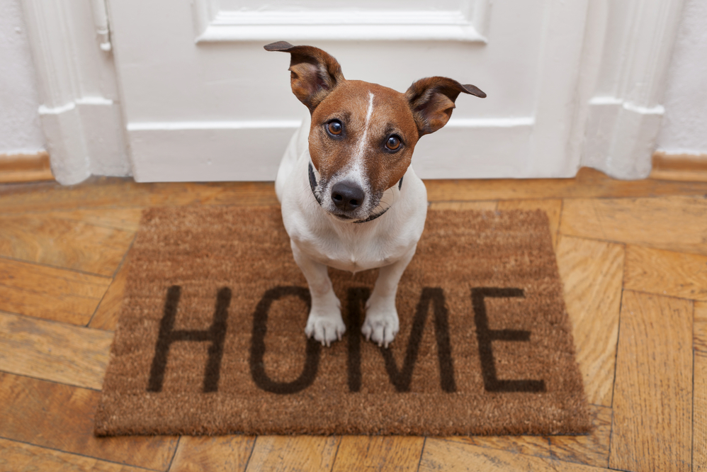 How to prepare your home for a new dog?